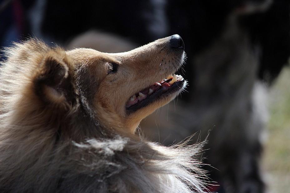 """Agility: """"Mycket fart och hundarna älskar det"""""""