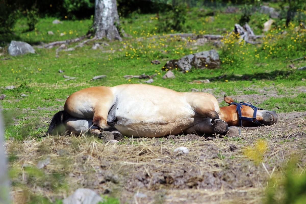 Alla hästar var inte lika taggade för tävling... Foto: Ida Lindkvist