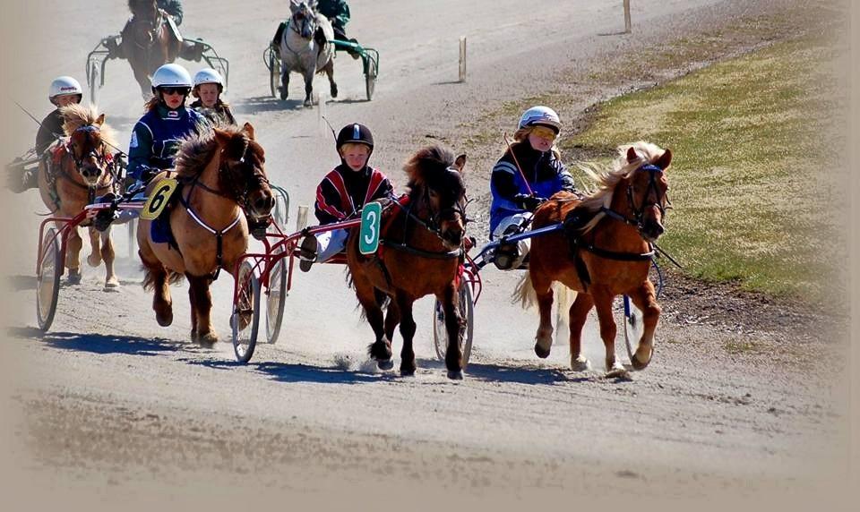 Söndagens heldag i Örebro med ponnytävlingar bjöd totalt på tolv starter. FOTO: Örebrotravet