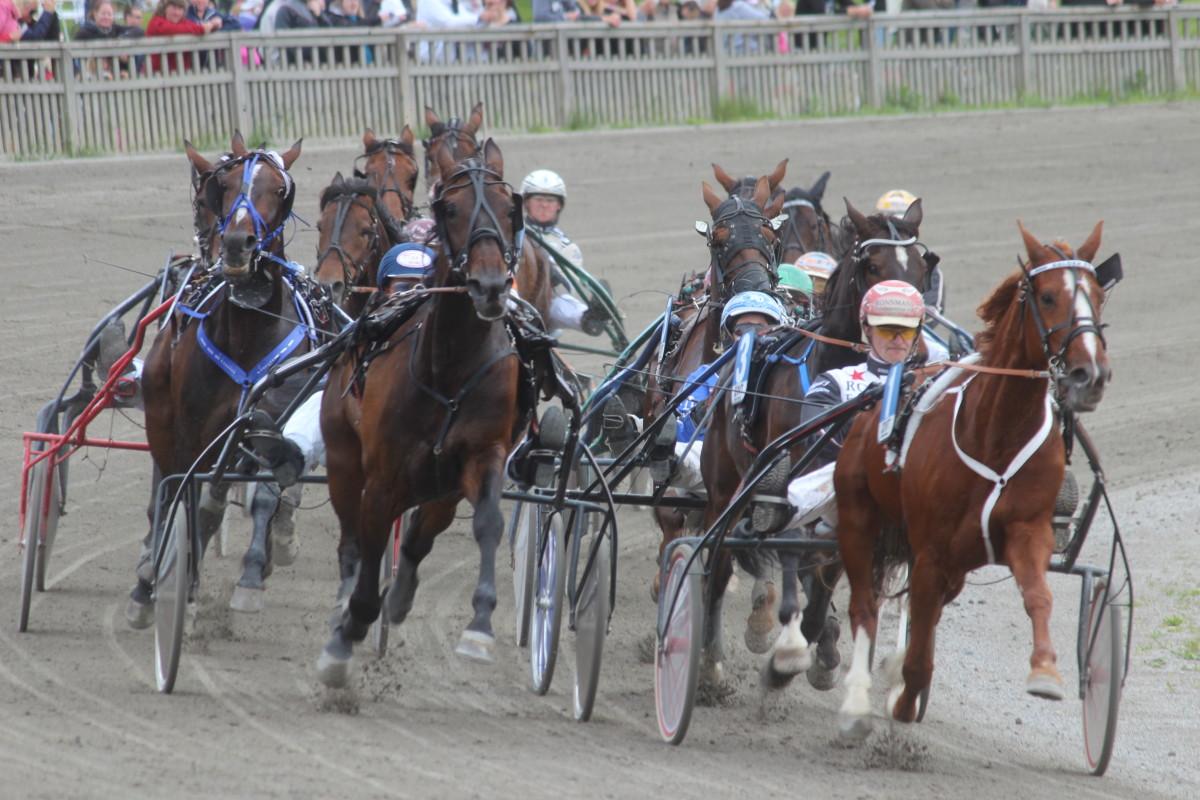 De lokala hästarnas framgångar fortsatte igår vid Fornaboda, med seger för Kid Käbb. ARKIVFOTO: Hannes Feldin