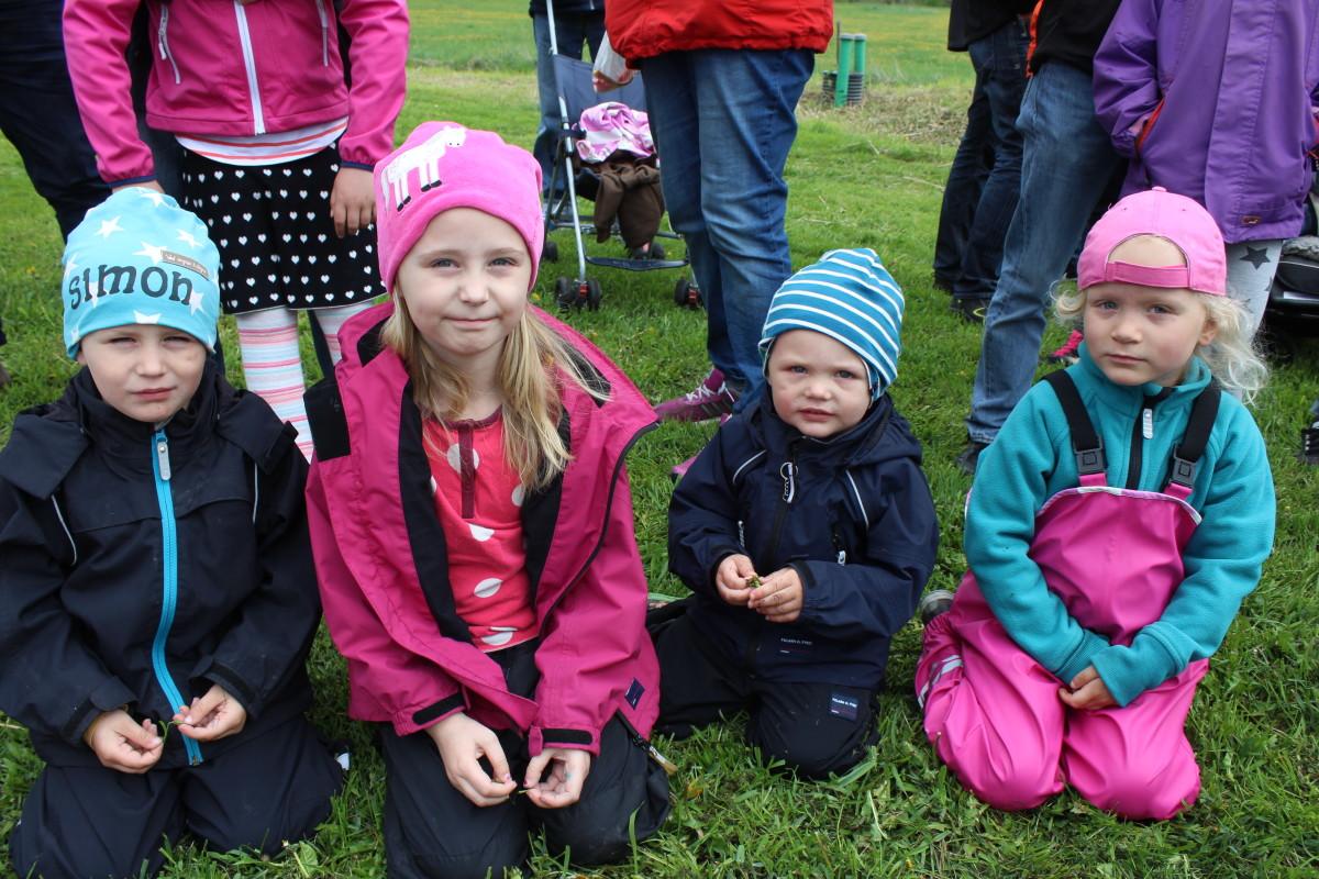 Simon, Julia, Anton och Emma väntar på att korna ska komma ut. Foto: Ida Lindkvist