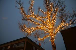 Ett av träden som uppgraderats vid Flugparken. Foto: Fredrik Norman