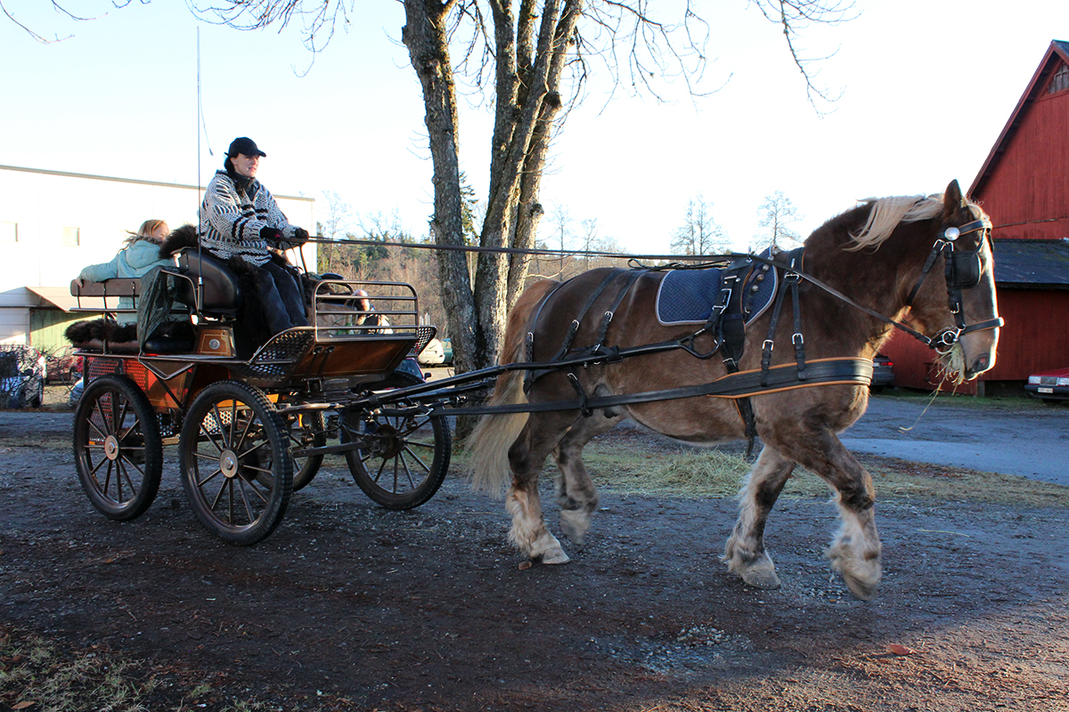 Kusken Tekla Rapp bakom ardennern Jussi. Foto: Jennie Larsson