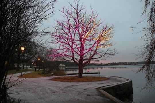 Att större delen av trädet gav ifrån sig ett lila sken, var inte uppskattat av alla. Nu har det färgglada trädet släckts i väntan på åtgärd. Foto: Fredrik Norman