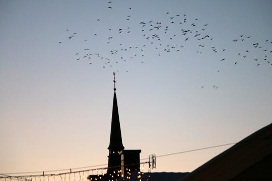Kajor i centrala Lindesberg har blivit ett problem som nu skall lösas. Foto: Fredrik Norman
